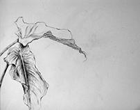 Sketches // Bocetos