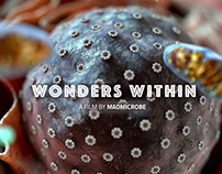 MadMicrobe: Wonders Within