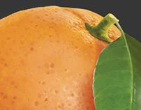 Fresh fruit illustrations