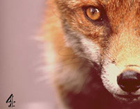 Foxes Live: Wild in the City