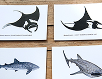 Marine Megafauna / illustrations & maps