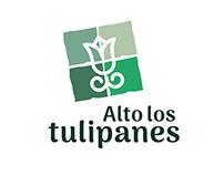 alto los tulipanes
