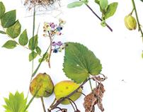 Poster for annual garden market
