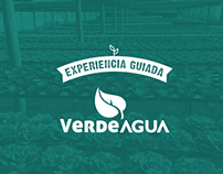 VerdeAgua - Kit Hidropónico