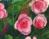 Leu Garden Roses - Watercolor on paper