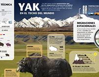 Infografía interactiva en el entorno: El yak