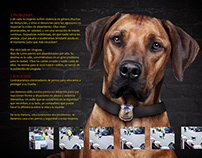 Doggy guard