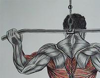 Série Músculos