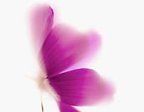 Flowers - Lumas Editionsgalerie
