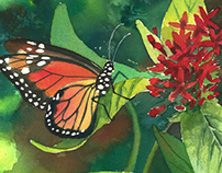 Monarch with Milkweed - Watercolor sketch