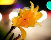 Fotografia/Photography