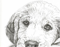 Stipple Puppy