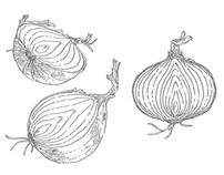 Vegetable Drawings for Restaurant Website (Unused)