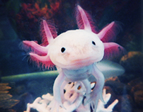 Axolotl Photography