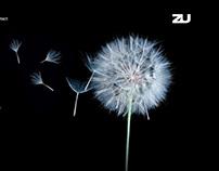 zu - Rebranding & Website Design