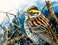 Yellow-browed bunting for Club 300 Sweden