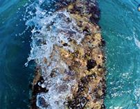Underwater Photography Florida 2012