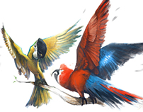 Birds :)