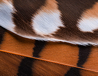 Penas Nativas / Native Feathers