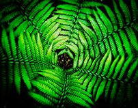 Nature - za