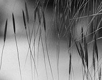 Grasses x Grain