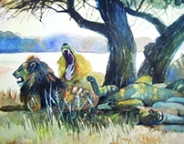 Pride of Lions - Acacia Shade - Watercolor on paper
