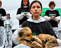 Día Internacional de los Derechos Animales