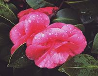 Flowers Pt. VI