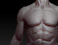 Human anatomy sculpt