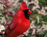 Pájaro del amor
