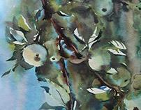 Watercolor/Apples