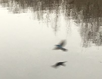 Sparrow Shadows