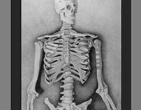 Illustration : Skeleton anatomy : Pencil on rag paper