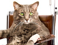 Animal Cancer Therapy Subsidization Society