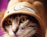 A little cat/ Un petit chat