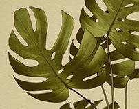 Botanical Illustration Poster Series