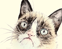 Tardar Sauce the Grumpy Cat