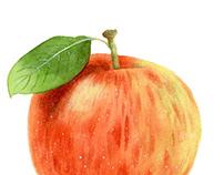 手绘水彩苹果