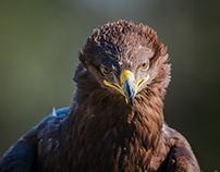 Birds Collection 14