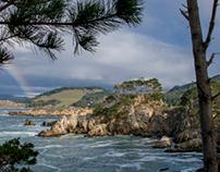 Point Lobos Gallery