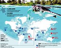 the rise of sea turtles in the world