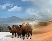 rent a camel
