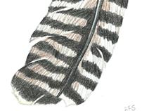 Tchotchke Illustrations
