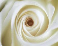 Flowerotica I