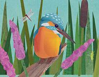 Pond - Children's Book