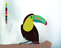 Toco Toucan Bird Illustration