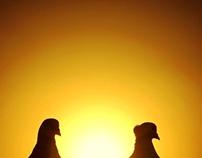 "Photography ""Birds"""