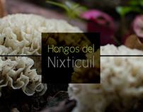 Hongos del Nixticuil