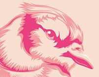 Pink Jay - Hilkar.mx
