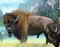 Grazing Bison - Digital Painting